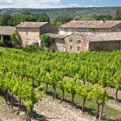visite du vignoble provence